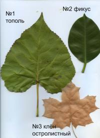 page4915-listya_1-3.jpg