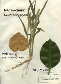 page4915-listya_7-9.jpg